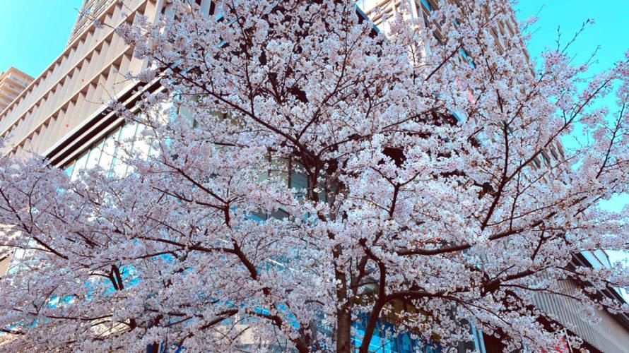 桜:難波でAGA・薄毛治療といえば/Dr.スキンクリニック大阪難波院